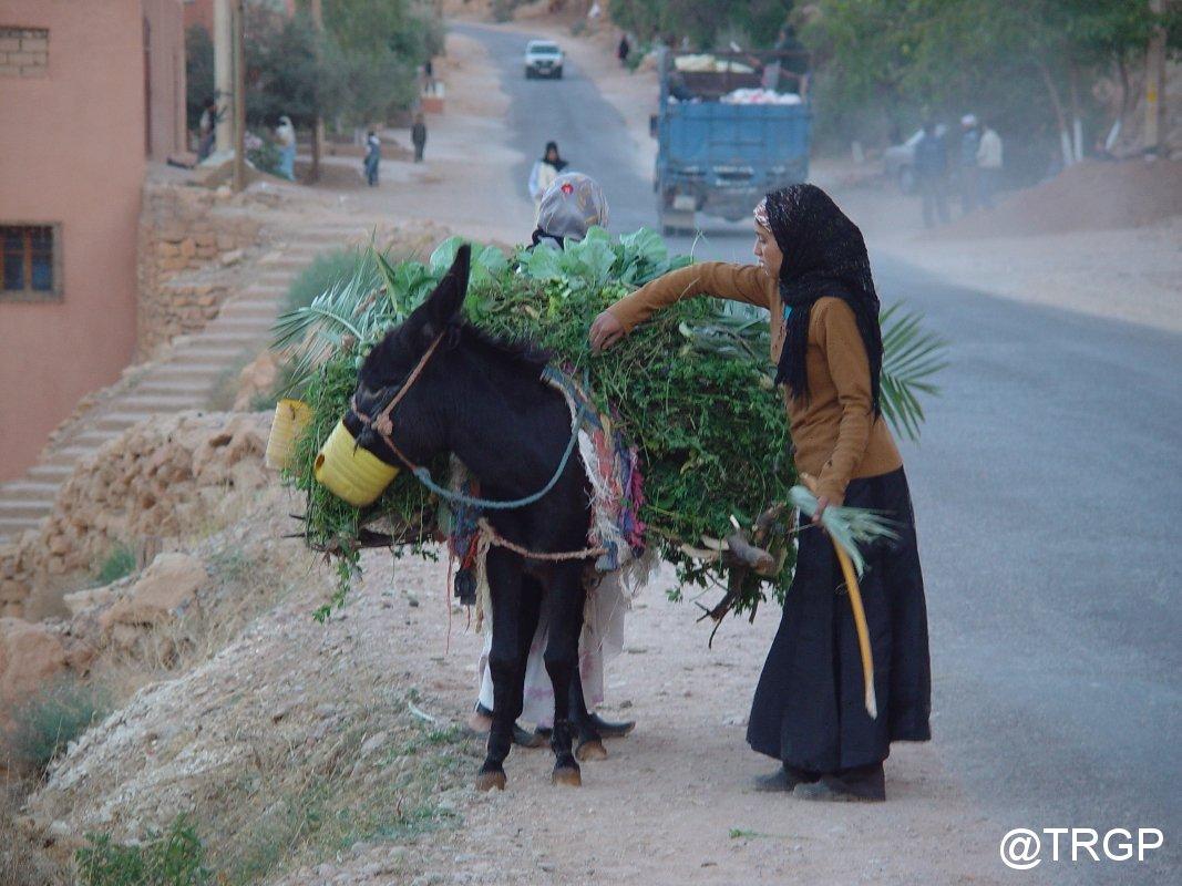 Tinerhir i Todra