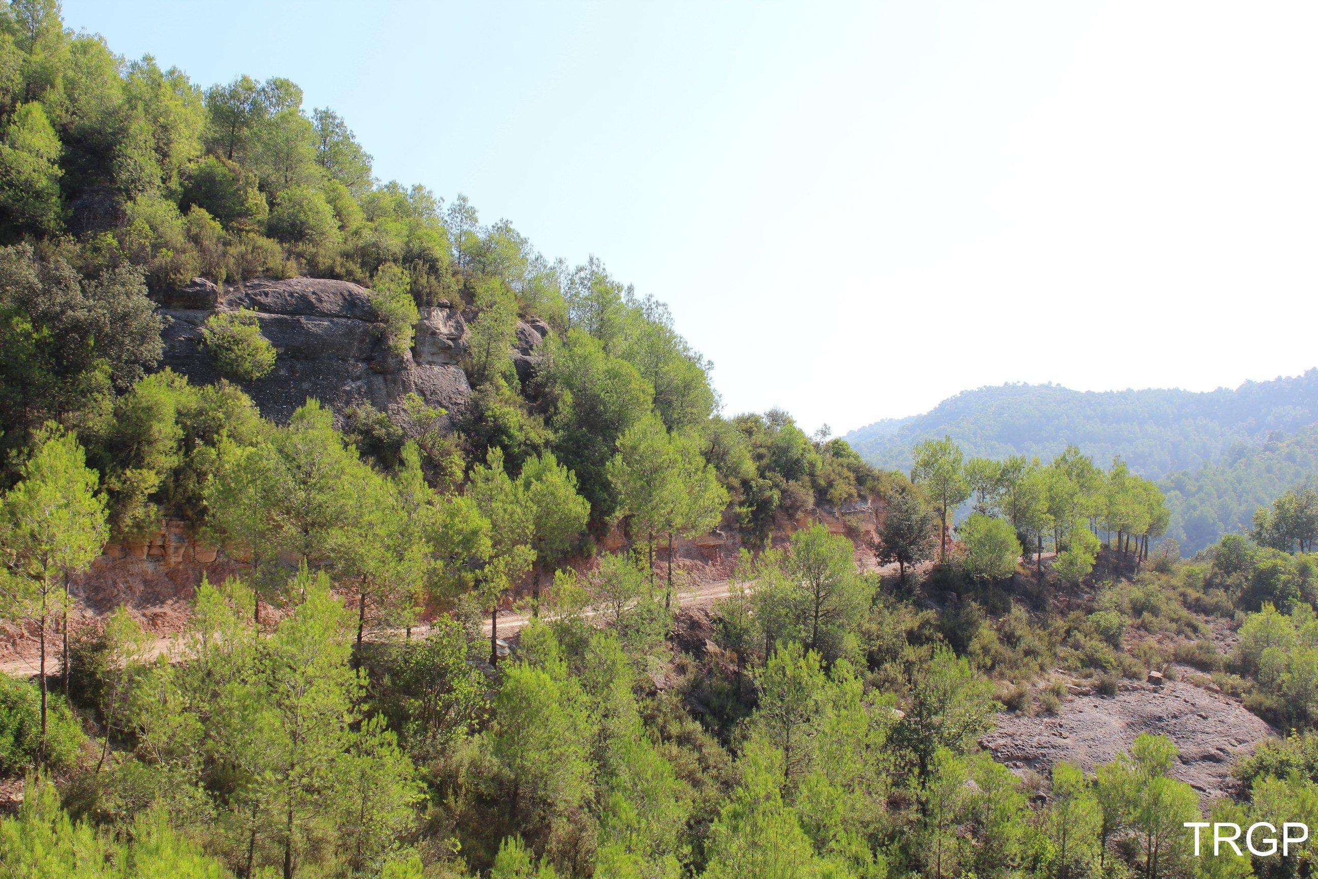 Tines de la Vall del Flequer