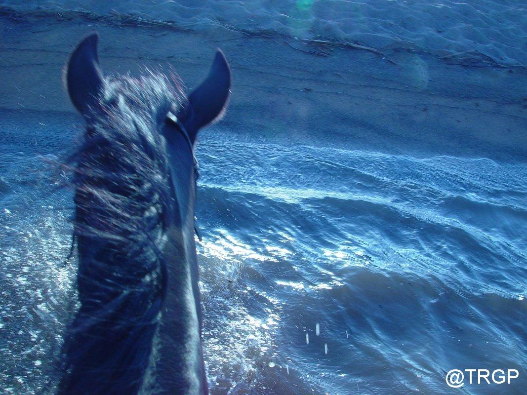 Excursió Cavall Pregonda